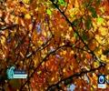 [09 December 2017] Awe-inspiring autumnal magnificence of Mazandaran in Iran - English
