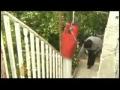 Jerusalem Palestinians fear eviction by Israel - 17Apr09 - English