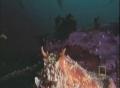 Octopus vs shark in underwater battle - English