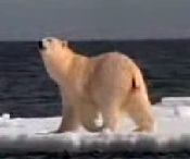 Natures Perfect Predators - Polar Bear - English