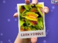 Carnivores Plants - Kya App Jante Hain? - Urdu