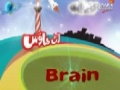 Functions of Brain - Urdu