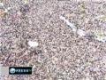 Egypt old regime still in power - Interview 08Apr2011 - English