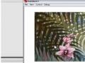 Tweening Timeline Images Fade Transition Effect for Photoshop & Fireworks Imports - English