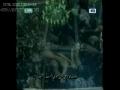 Dun bherian veer de ulfat vich - Syed kasran party - Punjabi Noha