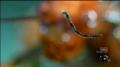Giant Rainforest Mantis vs Spiny Leaf Insect  -Monster Bug Wars - English