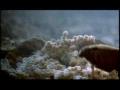 Emperor Cichlid Fish & Terrapin Turtle - English