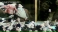 Legacy of Imam Khomeini within 5 Minutes - Arabic sub English