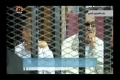 [11 June 13] Egyptian court orders release of Mubaraks sons - Urdu