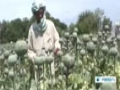 [29 May 2014] Afghanistan postpones poppy eradication campaign - English