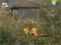 [07 Episode | قسمت] Khuneye Madar Bozorge - خونه مادربزرگه - Farsi