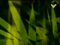Nasheed - Hoa AlOmro Yamdhi - هو العمر يمضي - Arabic