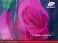 Glory be to Allah | Canticle [ Arabic Sub English ]
